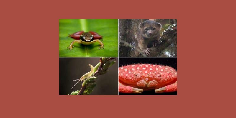 24 espèces animales découvertes au XXIe siècle