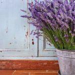 Photo: http://img.facv.pmdstatic.net/fit/http.3A.2F.2Fdata.2Evodemotion.2Ecom.2F998.2F998.2Ejpg/1280x720/quality/80/comment-planter-de-la-lavande-dans-son-jardin.jpg