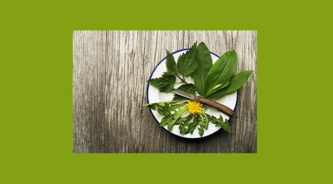 Les plantes pour nettoyer l'organisme «Détox»